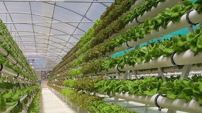 Xây dựng nhà kính cho vườn rau sạch.